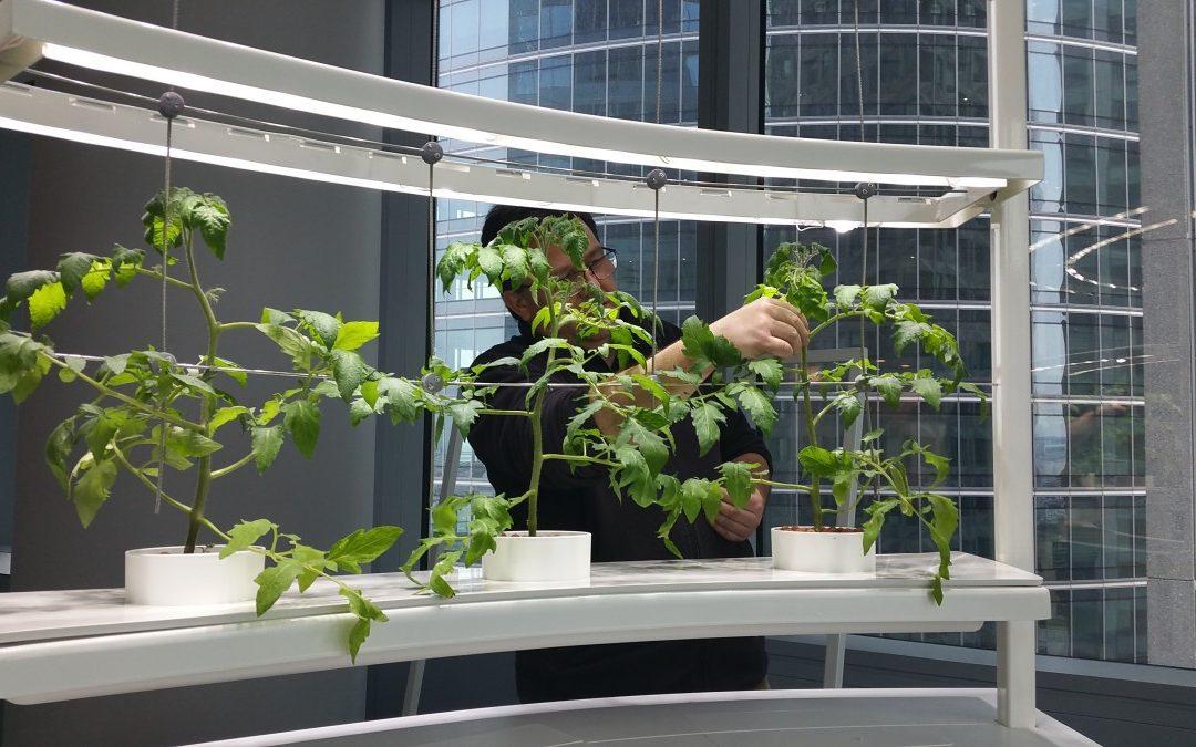 In Vivo: incredible edible indoor garden, 3rd Price