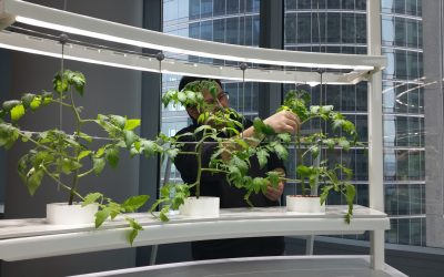 In Vivo: incredible edible indoor garden, 3rd Price