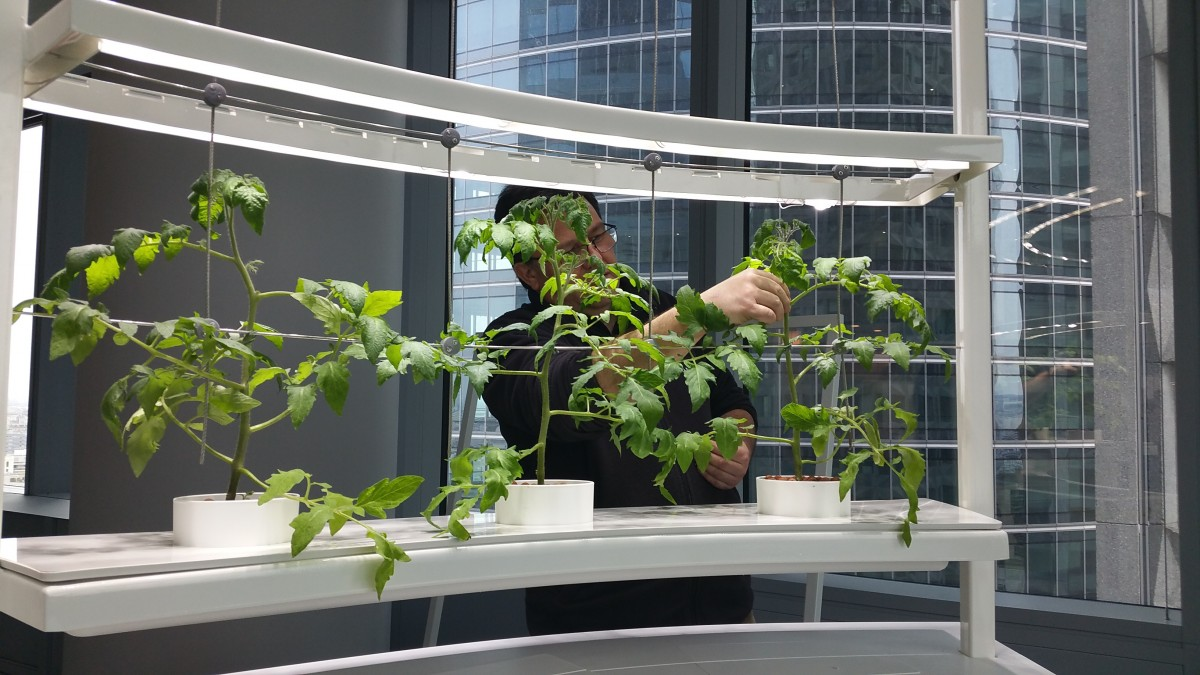 Gally_In_Vivo_Incredible_Corporate_edible_indoor_garden_2017_04 (2)