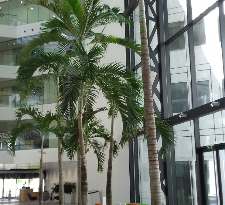 A tropical forest for an aircraft manufacturer