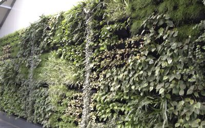 Large green walls are spectacular. But how do you keep them that way?