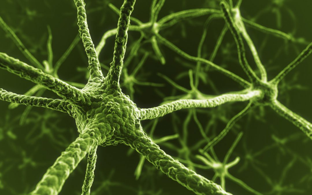 The wondrous world of plants and how intelligence helps them to survive