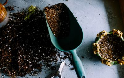 How plants flourish: the advantages of healthy soil life in potting soil