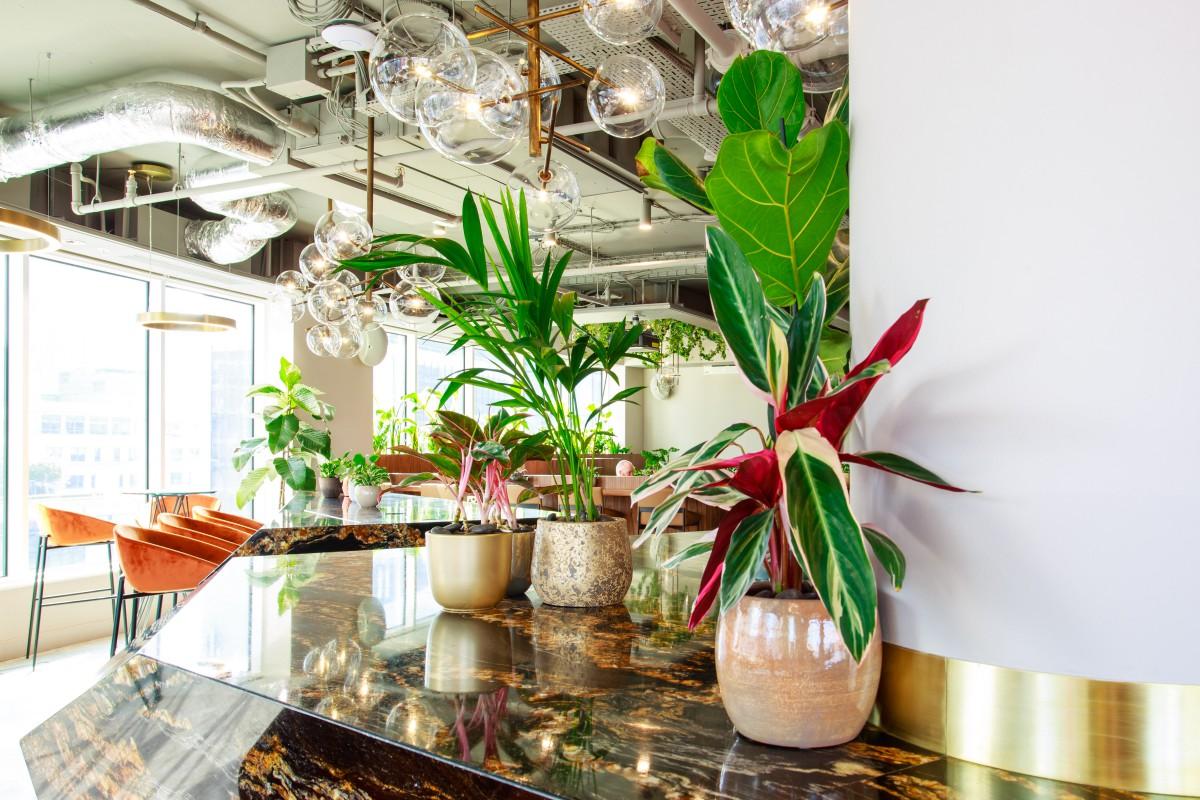 Plant Designs Uncommon Counter Top