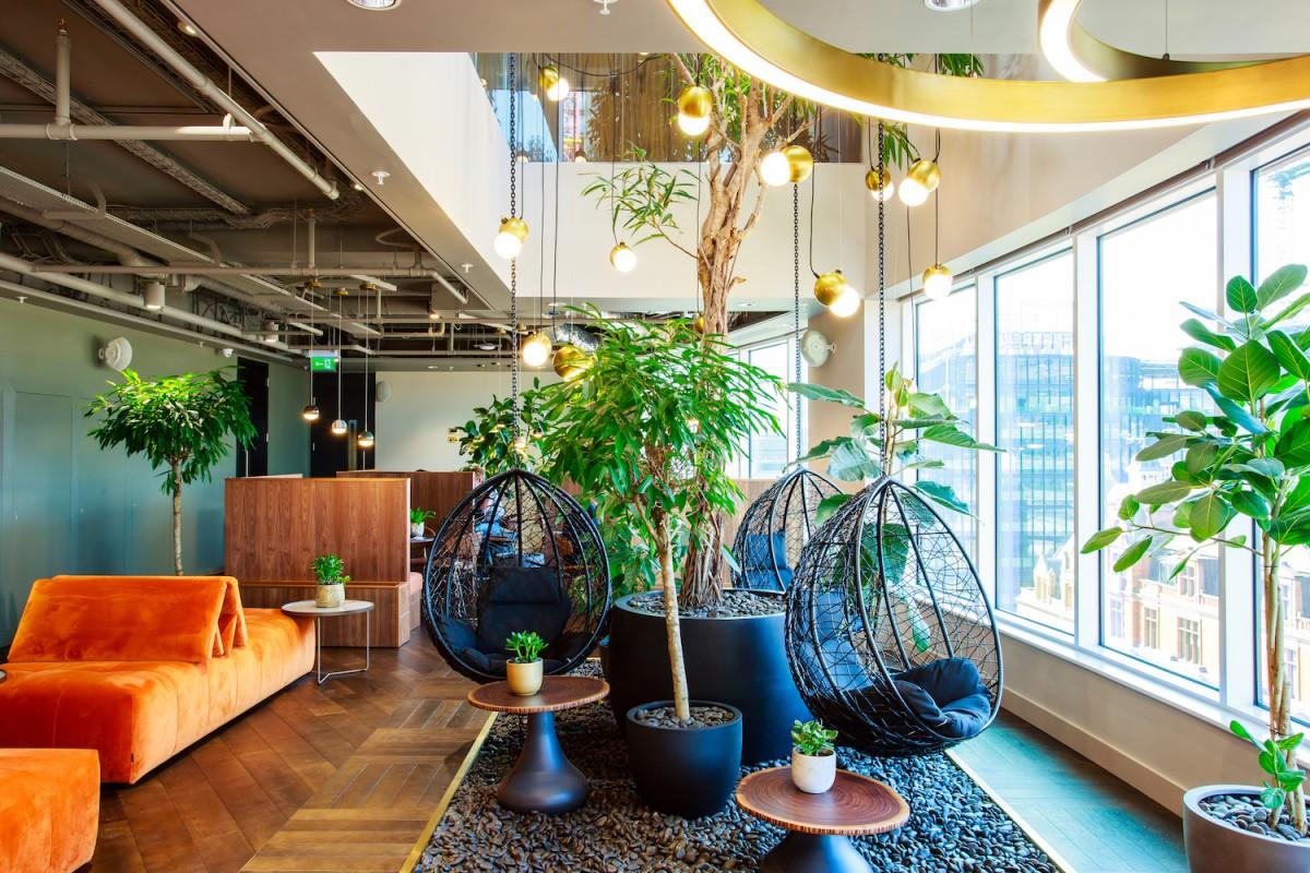 Plant Designs Uncommon Ficus Alii 7th Floor