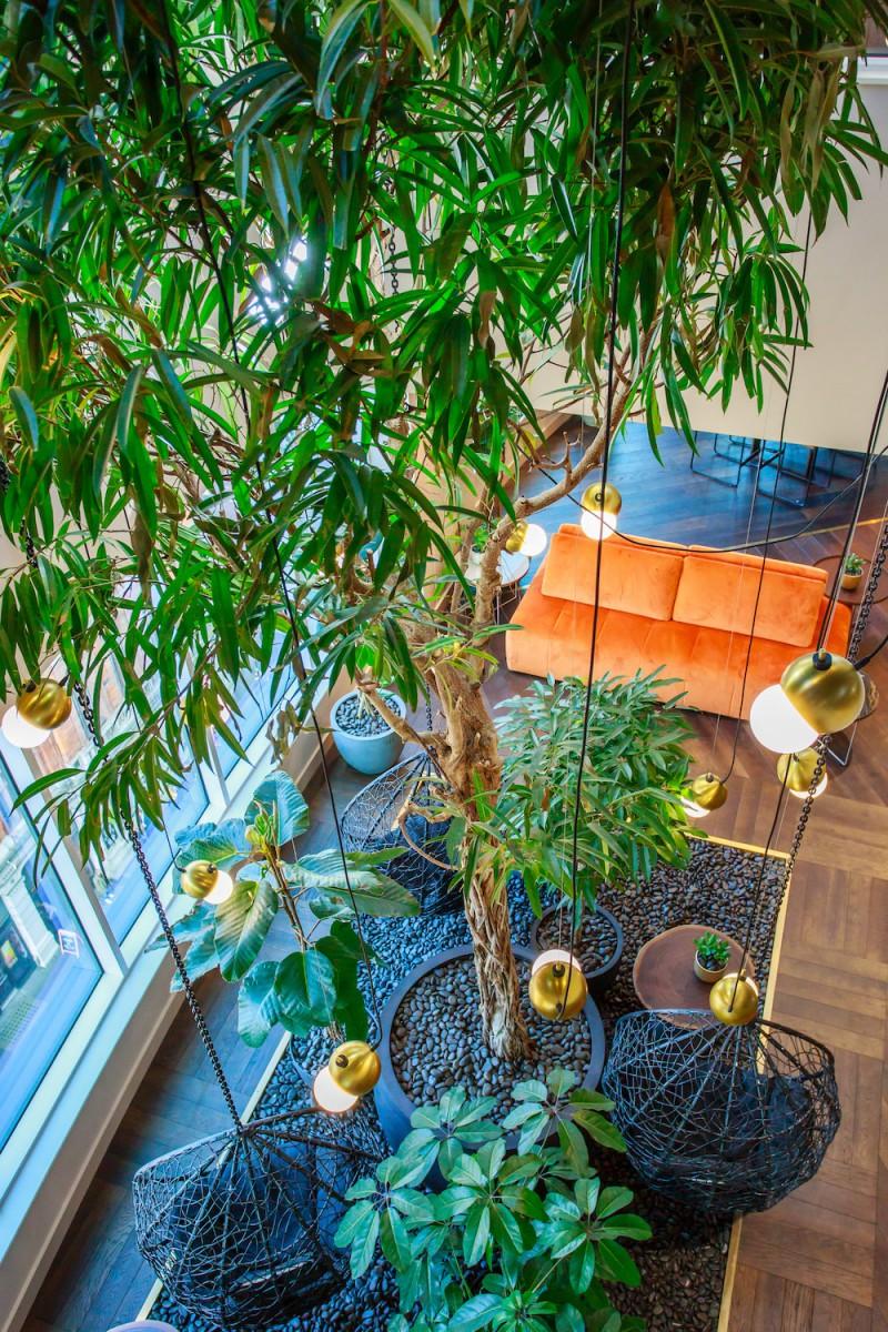 Plant Designs Uncommon Ficus alli 8th Floor