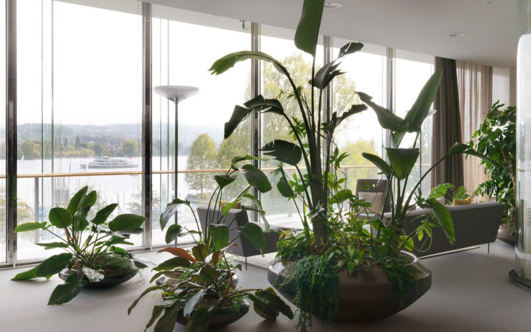Interior plant design with continent-specific vegetation