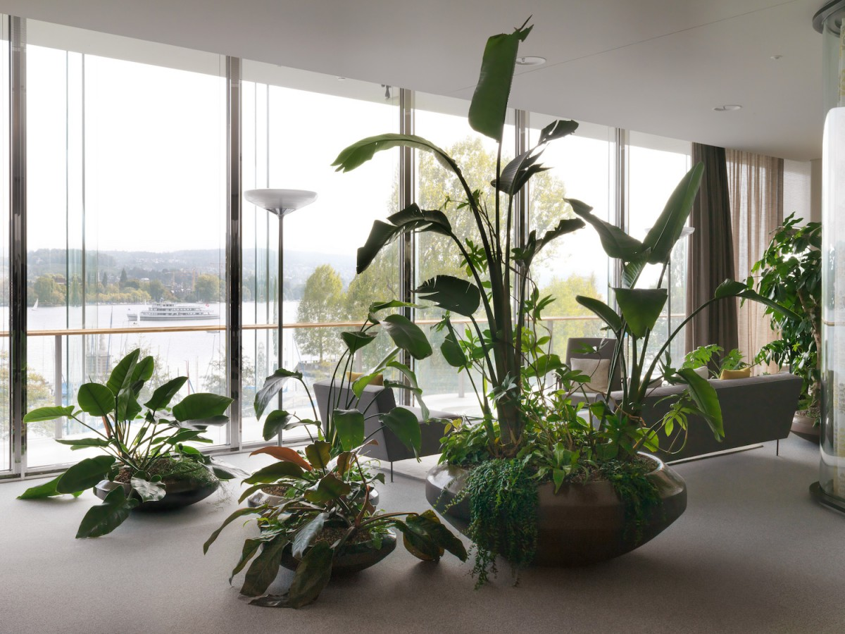 Interior Plant Design With Continent Specific Vegetation European Interior Landscaping Organisation